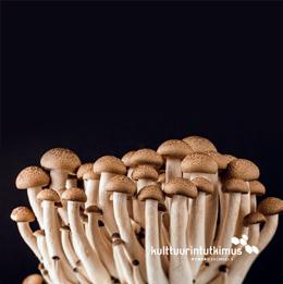 Lehden kansi, jossa sieniä
